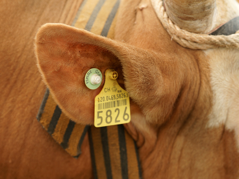 Animal Tracking Applications with RFID Tags